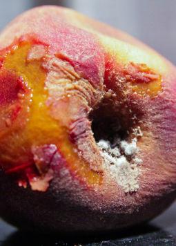 Pfirsich-Lebensmittelverschwendung(c)Steven-Depolo-via-Flickr - Ein schimmelnder Pfirsich in Nahaufnahme - © Steven-Depolo-via-Flickr
